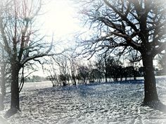 A photo I took of a beautiful snowy day