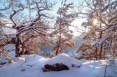 Winter Trees Of Saxon Switzerland by Jenny Rainbow Art Prints For Home, Fine Art Prints, Framed Prints, How To Make Snow, Winter Trees, Time Art, Beautiful Landscapes, Fine Art Photography, Switzerland