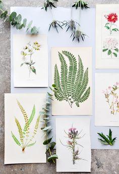 vintage botanical prints // new arrivals