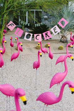 "been flocked"" prank for April Fools ""You've been flocked"" prank for April Fools with tons of flamingos.""You've been flocked"" prank for April Fools with tons of flamingos."