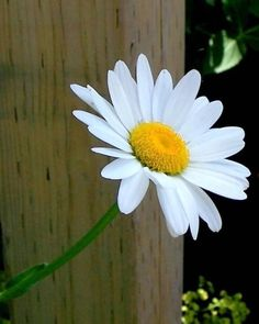 (notitle) The post appeared first on Fotografie. Little Flowers, Tiny Flowers, Flowers Nature, Amazing Flowers, Beautiful Flowers, Virtual Flowers, Sunflowers And Daisies, Daisy Love, Garden Quotes