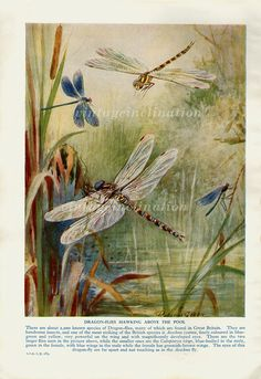 Antique Art Print 1950 DRAGON FLY dragon by VintageInclination, $9.95