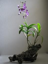 Mounting orchid to wood