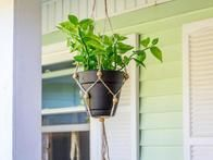Learn how to make a simple macrame plant hanger with easy, step-by-step instructions from HGTV Gardens.