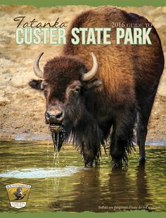 Scenic drives in Custer State Park.  Must do between Mt. Rushmore and Custer State Park.
