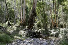 Image result for australian bush photo