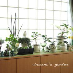 ベランダガーデニング : ぶいくんの庭
