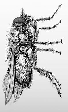 fly.jpg (565×929)