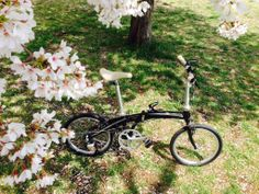 Copyright © yossie65 様 / 2014 Mu P9 / 何時もはロードバイクでサイコンと睨めっこしながら走っているので桜の時期にも途中で止まる事はなかったのですが、P-9を手に入れてからは「周りの景色を楽しむのも自転車なんだよね」と改めて感じさせてくれました。桜の美しさによく合う流麗なデザインが大好きです。