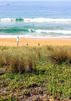 Palm Beach in Sydney, Australia - One of Sydney's best beaches!