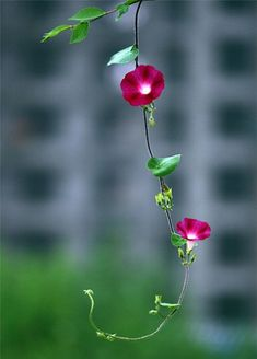 Zen means putting it all down, cutting off all thinking, and returning to your pure and clear original nature. Amazing Flowers, Beautiful Roses, Pretty Flowers, Colorful Flowers, Wild Flowers, Beautiful Flowers Wallpapers, Beautiful Nature Wallpaper, Arrangements Ikebana, Flower Phone Wallpaper
