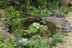 Make a wildlife friendly pond with a range of plants and shallow beach. Find out how at http://www.gardenersworld.com/plants/features/wildlife/attract-wildlife-to-your-garden-pond/1094.html Photo by Jason Ingram