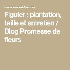 Figuier : plantation, taille et entretien / Blog Promesse de fleurs