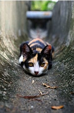 Amazing >> Beautiful Cats And Dogs ;-)