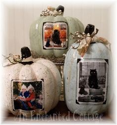 Photo pumpkins