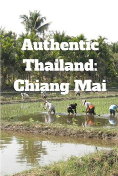 Authentic ways to experience Thailand in Chiang Mai - that don't involve harem pants, Chang or UV paint... read about how to see Thailand like a local on While I'm Young and Skinny.