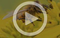 Pollinators   Natural History Museum of Utah