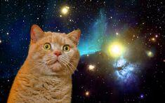 3photos: Cat in Space