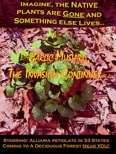 AghH! Garlic Mustard! Invasive Species Horror Story