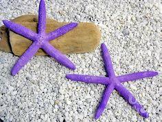 Finger Sea Star
