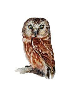 Owl print  Northern Saw Whet Owl by jodyvanB on Etsy, $25.00