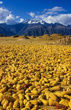 Peru-South-America - Can anyone shed any light on the photo?  Why is all the corn on the ground? Thanks . . .