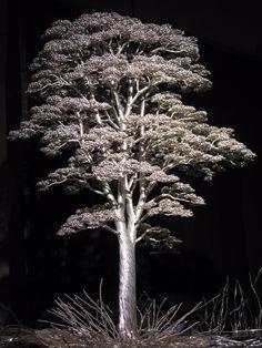 A Guide To Bonsai Trees For Beginners Bonsai Tree Price, Buy Bonsai Tree, Japanese Bonsai Tree, Bonsai Trees For Sale, Bonsai Tree Care, Tree Sale, Bonsai Wire, Juniper Bonsai, Wire Tree Sculpture