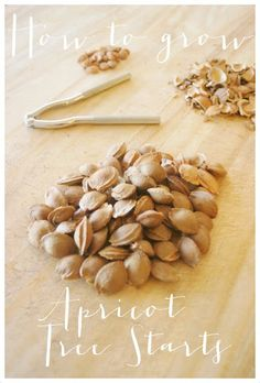 How to Germinate and Grow Apricot Tree Starts