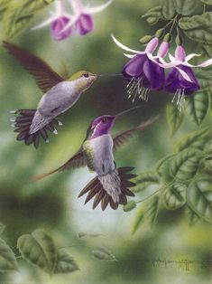 hummingbird....They can fly forward, backwards, upside down and sideways.....they are truly  amazing