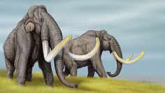 Steppe Mammoths by ~DiBgd