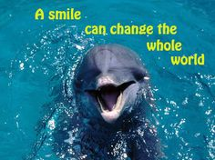 Image result for dolphin images + quotes