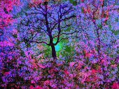 Flowering Tree - (CC)Russ Seidel - www.flickr.com/photos/10159247@N04/4538828589/in/set-72157603420266685#