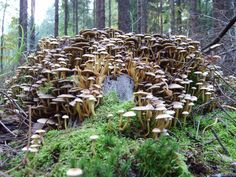 Build this kind of mushroom system and let the mushrooms grow into dollars. You may receive prices ranging from $4.50 to $10.50 per pound...