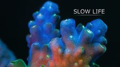 Beautiful video - Slow Life on Vimeo