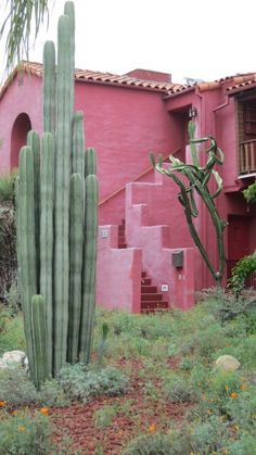 Cactus and Orange Flowers and a pink house. Pink and green is a magical combo. Pink Houses, Southwest Style, Spanish Style, Spanish Revival, Spanish Colonial, Cactus Flower, Garden Cactus, Cactus Cactus, Cacti And Succulents