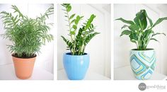 The Breathtaking Benefits of Houseplants - One Good Thing by Jillee