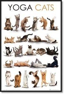 I love these kitties!