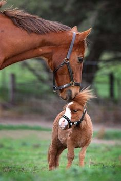 What's cuter than a horse? A tiny horse, of course.