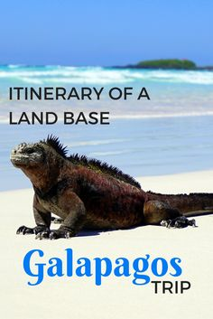 galapagos marine iguana http://www.southamericaperutours.com/southamerica/12-days-wonders-of-machu-picchu-and-galapagos.html