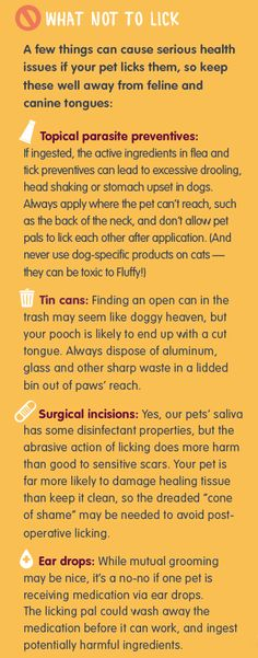 What Not To Lick: Keep These Items Far Away From Curious Pet Tongues!