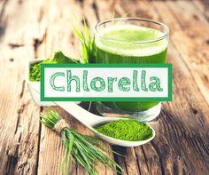 Was ist Chlorella? Chlorella ist eine Mikroalge, die aufgrund ihrer Wirkungsweise einzigartig ist und zudem sind kaum Chlorella Nebenwirkungen bekannt.