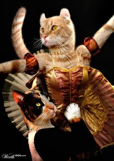 CATS doing ballet - This is for Dan