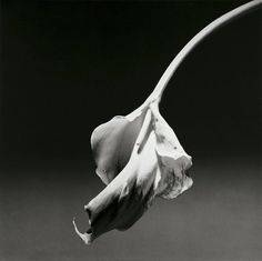 Robert Mapplethorpe: Meet the Famous Photographer of the '80s