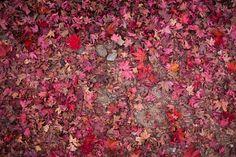 Autumn colour in Kyoto