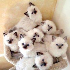 7 little Millly's