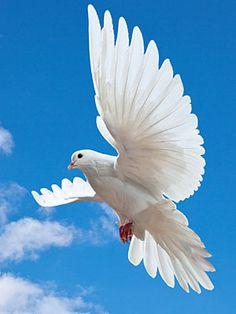 193 best dove holy spirit images on pinterest holy spirit holy