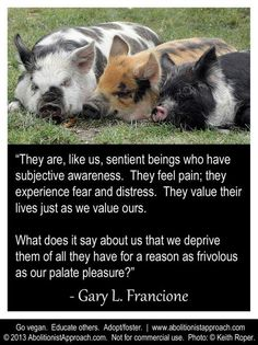 """""""They are, like us, sentient beings who have subjective awareness. Vegan Facts, Vegan Memes, Vegan Quotes, Animals And Pets, Cute Animals, Stop Animal Cruelty, Animal Testing, Why Vegan, Vegan Animals"""