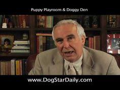 Puppy Playroom & Doggy Den | Dog Star Daily