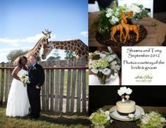 SHAWNA & TONY Get married with giraffes as your witnesses at Great Adventure in Jackson, NJ then party on in the park with your guests. Wedding Coordinator, Wedding Planner, Destination Wedding, Greatest Adventure, Giraffes, Celebrity Weddings, Corporate Events, Got Married, Bride Groom