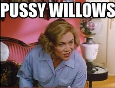 Pussywillows